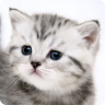 Cute Kitties Wallpaper