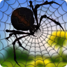 Crush the Spiders Puzzle