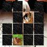 MaxMem - Cute Animals