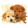 Cute Puzzle Puppies