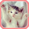 Cute Kitten Sounds