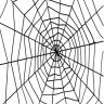 SpiderMonkeyy