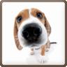 Sniffing Dog 2.0