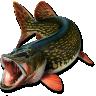 Journal de pêche free