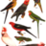 Vintage Bird Wallpapers