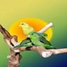 Birds Memory Game