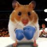 Hamster Live Wallpapper