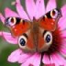 Butterfly Wallpapers HD