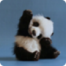 Cute Waving Panda (Ad-Supported)