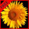 Flower Fields: Sunflower LWP