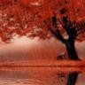 Autumn Scenary Rain Live Wallpaper