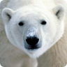 Save the Arctic! LWP
