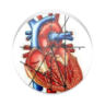 CardiAxis