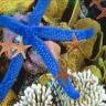 Star Fish Wallpaper