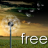 Free Dandelion live wallpaper.