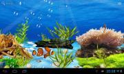 Aquarium live