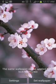 Sakura HD WallPaper