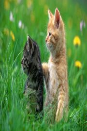 Funny Animals Wallpapers HD