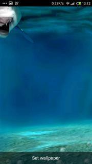 Underwater Shark Scene