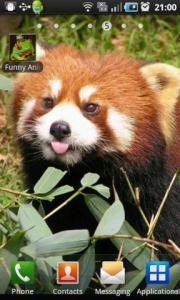 Funny Animals Live Wallpaper