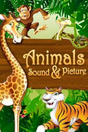 Animals Sound & Picture