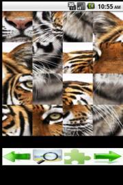 big cats Puzzle