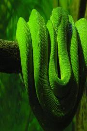 Snake Wallpapers HD