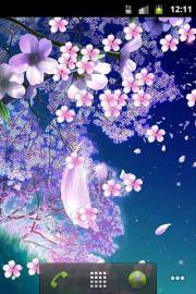 Cherry Blossoms Live Wallpaper