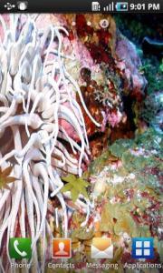 Aqua Deep Wallpaper