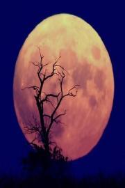 Moon wallpapers