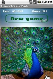 Peacock Splendor Puzzle