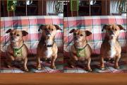 Dogs Spot