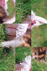 MP Cute Kittens add-on