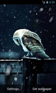 Owl Under Snowfall