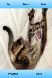 Yawn Wallpapers Free