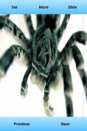 Tarantula Wallpapers HD