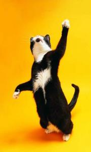 Funny Dogs And Cats Wallpapers