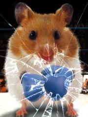 Hamster Live Wallpapper