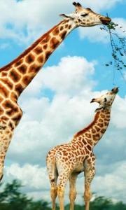 Beautiful Animals HD Wallpapers
