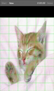 I love: Cats