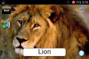 Safari Slides Lite