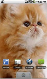 Cute Kitten Live Wallpapers