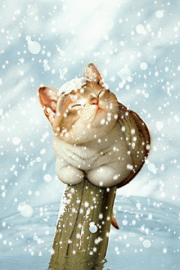 Cat Under Snow Wallpaper