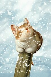 Cat Under Snow Wallpaper