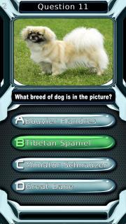 My Dog Breeds Quiz
