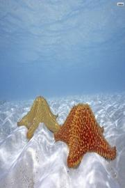 Sea star Wallpapers HD