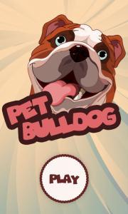 Pet Bulldog