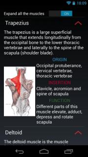 Atlas of superficial muscles