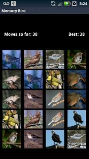 Memory Bird