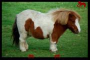 poniesforkids